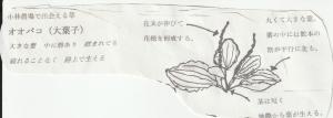 Img_20210706_0001